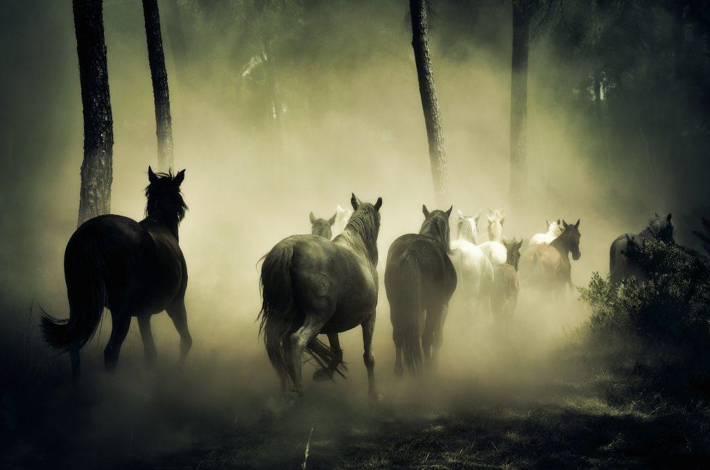 Regina Seidler - Pferdemotiv